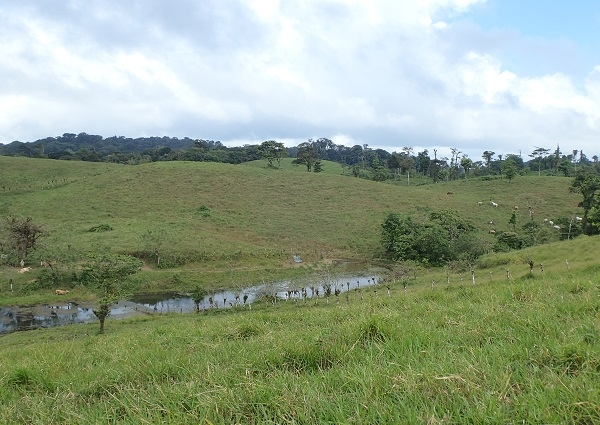 50 Hectares Excellent for Livestock