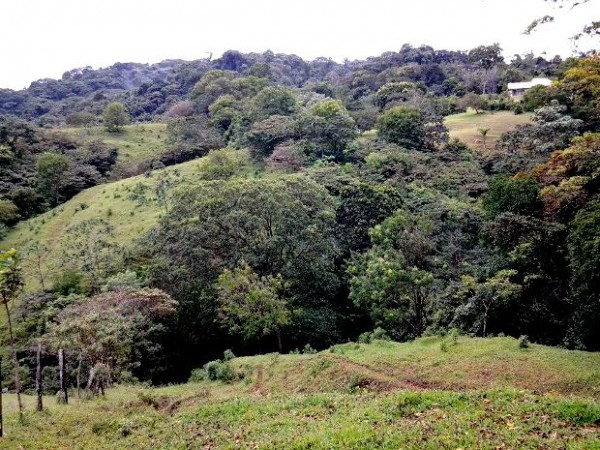 Bank-owned property in Tilaran- 5+ hectares
