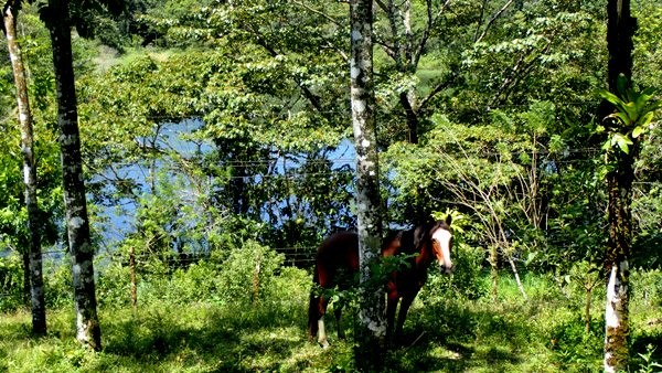 10+ Acres, House and Horse Stable on Main Paved Road, Right on Top of the Lake