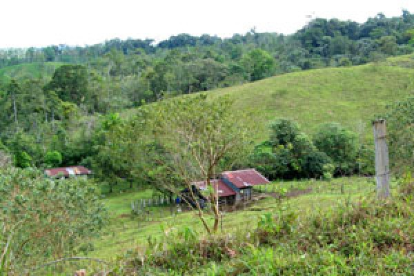 168-acre Eco-Property with 3 Incomplete Cottages- One of two Lowest-priced Properties in the Area